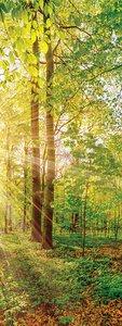 3308486-00000 Landschaft Wald grünGreen emot