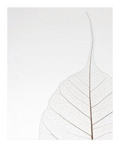 3557101-00000 White Leaf
