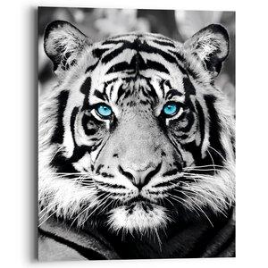 3557004-00000 Blue Eyed Tiger