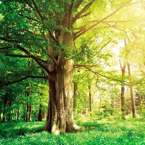 3363794-00000 Wälder - Green trees II