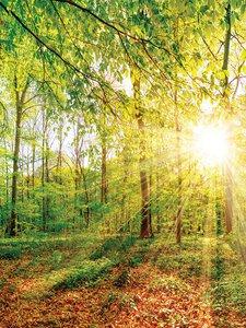3308491-00000 Landschaft Wald grünGreen emot