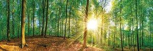 3308218-00000 Landschaft Wald grünGreen Mome
