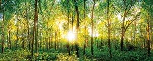 3308222-00000 Landschaft Wald grünSunlight f