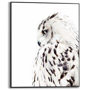 3556953-00000 White Owl