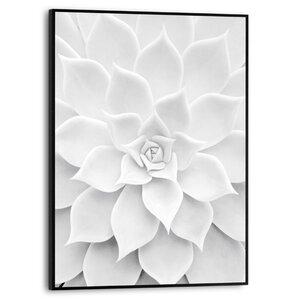 3556952-00000 Succulent White