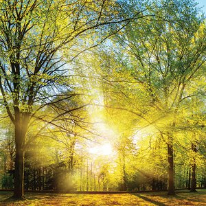 3308175-00000 Landschaft Wald grünGreen Summ