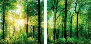 3308257-00000 Landschaft Wald grünSunlight f