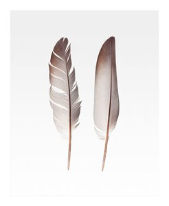 3557106-00000 Two Feathers