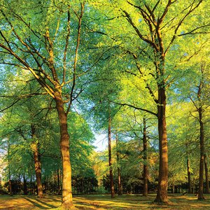 3308176-00000 Landschaft Wald grünGreen Summ