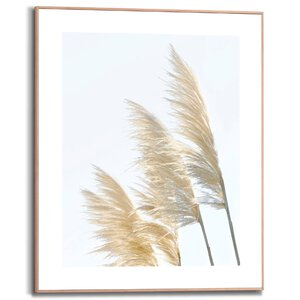 3557084-00000 Pampus Grass