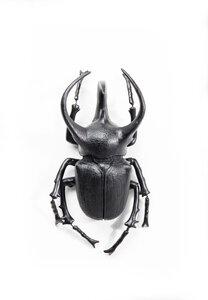 3270683-00000 Wandschmuck Atlas Beetle Matt