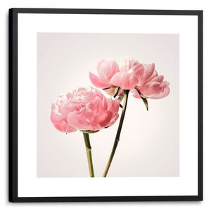3557021-00000 Pink Peony Vintage