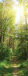 3308204-00000 Landschaft Wald grünGreen Mome
