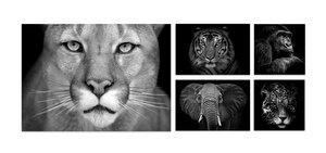 3363842-00000 Tiere - Animal Set II