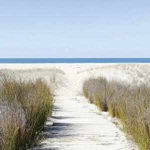 3308004-00000 Landschaft Nordseewhite dunes