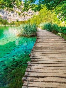 3363834-00000 Wälder - Beautiful path II