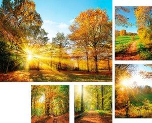3308488-00000 Landschaft Wald Herbstgreen fe