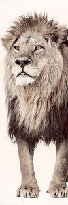 3556940-00000 Lion Watch