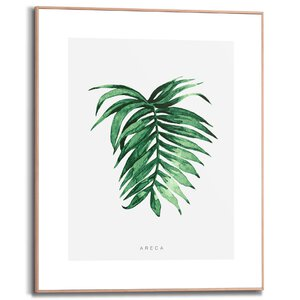 3556960-00000 Areca Leaf