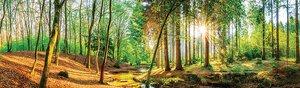 3307973-00000 Landschaft Wald grünGreen Mome