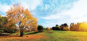 3308482-00000 Landschaft Wald Herbstcalm lan