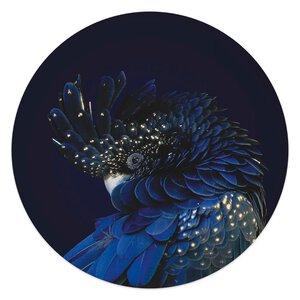 3557026-00000 Blue Parrot