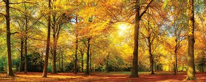 3308230-00000 Landschaft Wald HerbstLast ray