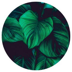 3483334-00000 Blumen / Makro - Tropical Gree