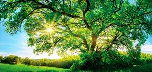 3363814-00000 Wälder - Grüner Baum