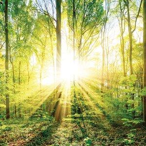3308126-00000 Landschaft Wald grüncharming g