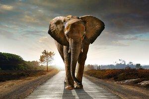 3307992-00000 Tiere ElefantElefant