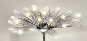 3151795-00000 Jewel Bloom 55x115 cm