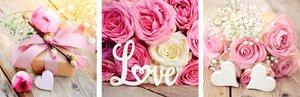 3593531-00000 Stillleben / Blumen / Pink Flo
