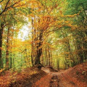 3308484-00000 Landschaft Wald HerbstGreenwoo