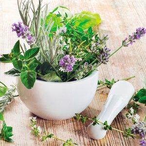 3483277-00000 Küche - Fresh Herbs II
