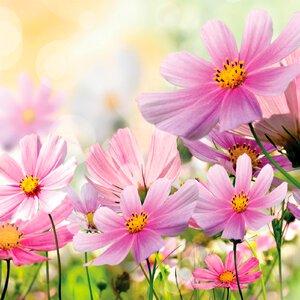 3483279-00000 Blumen / Makro - Spring Flower