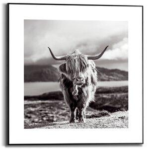 3557126-00000 Highland Cow