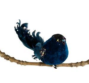 3536506-00000 Vogel blau beglimmert