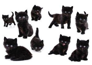 3308623-00000 Stickers Tieresüße Katzen