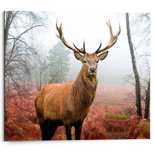 3109549-00000 Hirsch im Wald