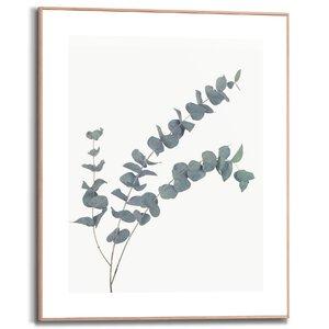 3557085-00000 Eucalyptus