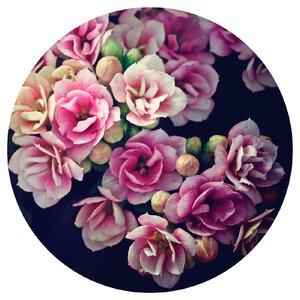 3483326-00000 Blumen / Makro - Dark Flowers