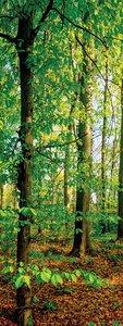 3308485-00000 Landschaft Wald grünGreen emot