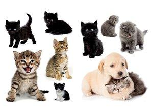 3308594-00000 Stickers TiereHund und Katze