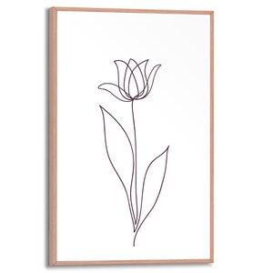 3557134-00000 Tulip Lines