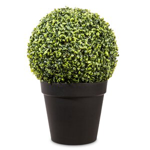 3200075-00000 Buchsbaumkugel im Kulturtopf