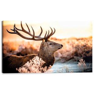 3109527-00000 Deer in Forest
