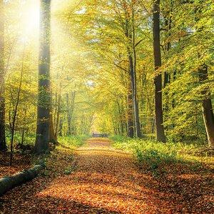 3308483-00000 Landschaft Wald HerbstGreenwoo