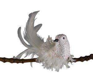 3536459-00000 Vogel weiß beglimmert