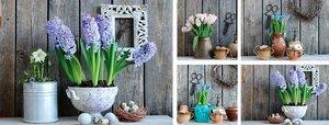 3308458-00000 Blumen StillebenStill Life Set